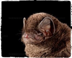 BATS_Fotor